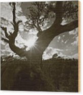 Silhouette Of A Gnarled Tree - Sepia Wood Print