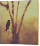 Silhouette Of A Hummingbird Against Golden Background, Mindo, Ecuador Wood Print