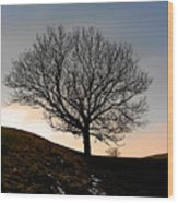 Silhouette Of A Tree On A Winter Day Wood Print
