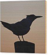 Silhouette Of Bird Wood Print