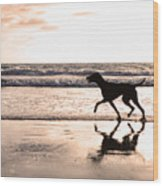 Silhouette Of Dog On Beach At Sunset Wood Print by Susan Schmitz