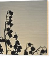 Silhouette Of Lilies Of The Valley 2 Wood Print