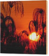 Silhouette Of Papyrus At Sunset Wood Print