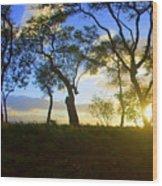 Silhouette Of Trees Wood Print
