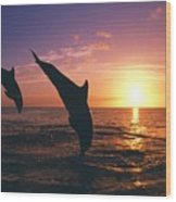 Silhouette Of Two Bottlenose Dolphins Wood Print