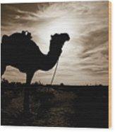 Silhouetted Camel, Sahara Desert, Douz Wood Print