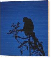 Silhouetted Proboscis Monkey Nasalis Wood Print