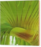 Silk Floss Palm Wood Print