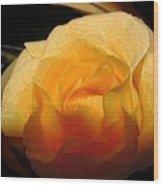 Silken Yellow Rose Wood Print
