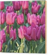 Silky Pink Tulips Wood Print