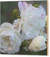 Silky Rose 2 Wood Print