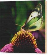 Silky Wings Wood Print