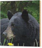 Silly Ole Bear Wood Print