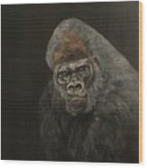 Silver Backed Gorilla Wood Print