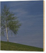 Silver Birch Tree Wood Print