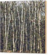 Silver Birch Trees Wood Print