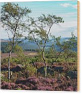 Silver Birch At Surprise View Wood Print
