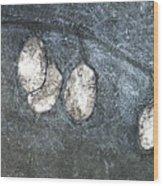 Silver Dollar Plant Wood Print