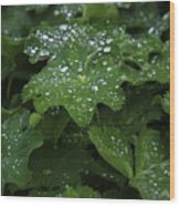 Silver Droplets Wood Print