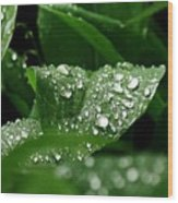 Silver Drops Of Spring Wood Print