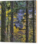 Silver Falls State Park Oregon 2 Wood Print