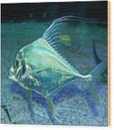 Silver Fish Wood Print