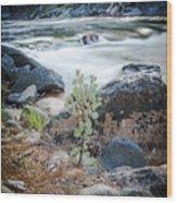 Silver Fork Manzanita Wood Print