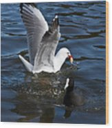Silver Gull And Australian Coot Wood Print