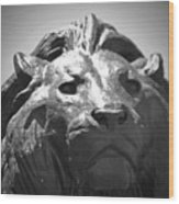 Silver Lion Wood Print