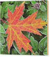 Silver Maple Frost Wood Print