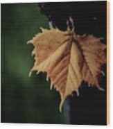 Silver Maple  Wood Print