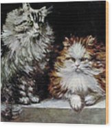 Silver Orange And White Persians Wood Print