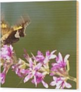 Silver Spotted Skipper Landing On Blooms                 August               Indiana Wood Print