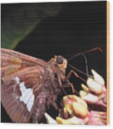 Silver-spotted Skipper Wood Print