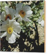 Silver Terrace Virginia City Nevada Flowers Wood Print