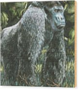 Silverback-king Of The Mountain Mist Wood Print