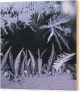 Silvery Window Fronds Wood Print