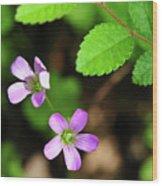 Simple Beauty II Wood Print