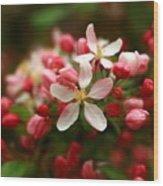 Simple Savory Spring Wood Print