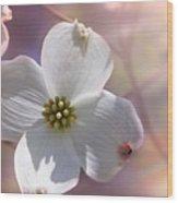 Simplicity A Dogwood Blossom Wood Print