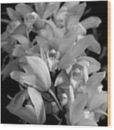 Simply Orchids Wood Print
