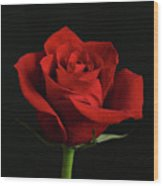 Simply Red Rose Wood Print