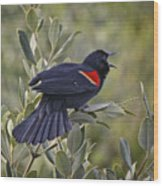 Sing Me A Song, Red-winged Blackbird Wood Print