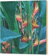 Singapore Heliconia Wood Print