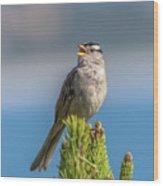 Singing Sparrow Wood Print