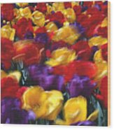 Singing Tulips L062 Wood Print