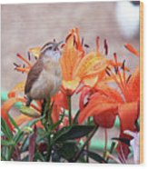 Singing Wren In The Lilies Wood Print
