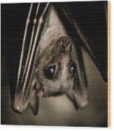 Single Bat Hanging Portrait Wood Print