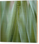 Single Blade Of Onion Grass Leaning - Color Version Wood Print