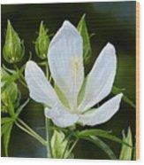 Single Bloom Wood Print
